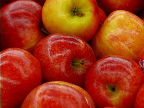 shiny, conventional apples