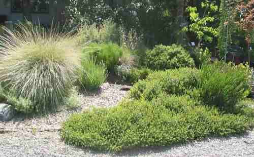nativeplants